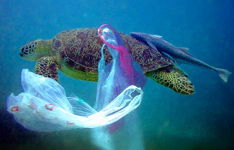 Plastic bags and other plastic garbage thrown into the ocean kill as many as 1,000,000 sea creatures a year!