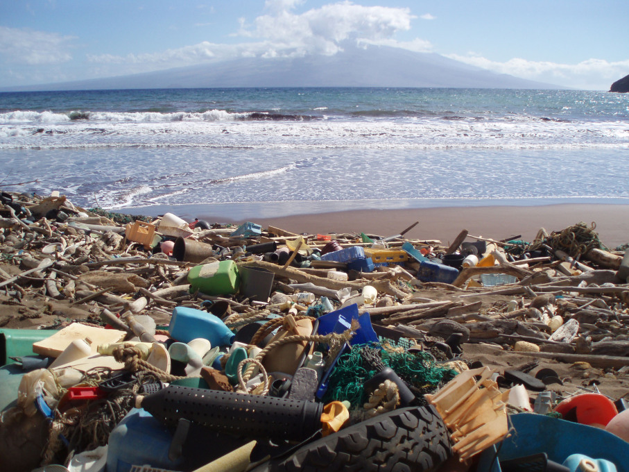 When the small particles from photodegraded plastic gets into the water, they are ingested by filter feeding marine animals. Biotoxins like PCBs that are in the particles are then passed up the food chain, including up to humans.